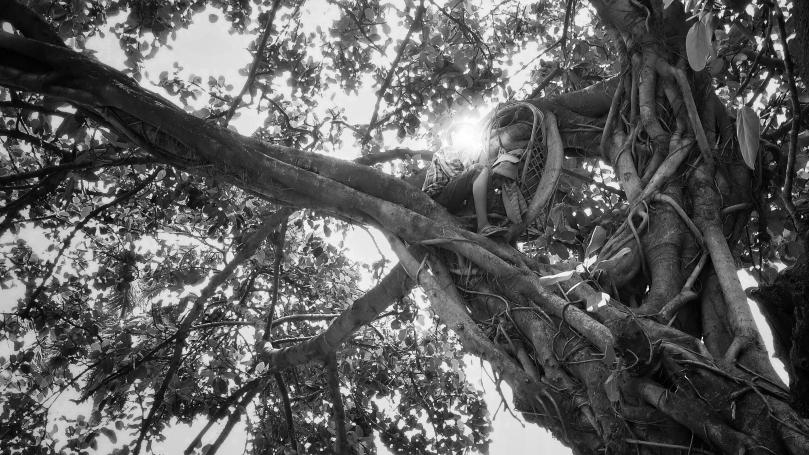Snapseed (3)